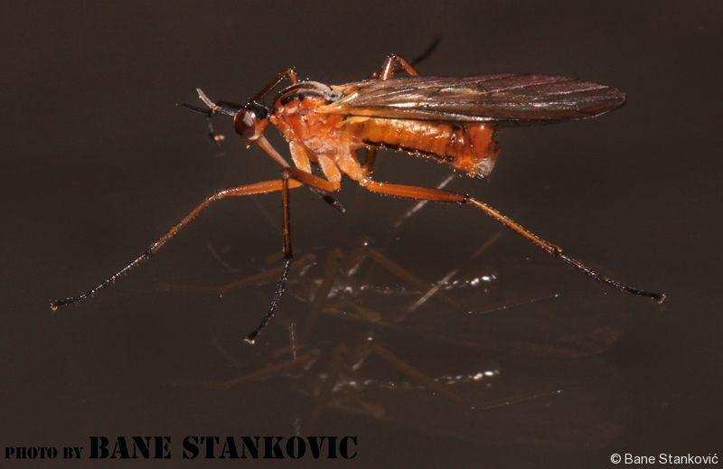 komarac-1-ee.jpg