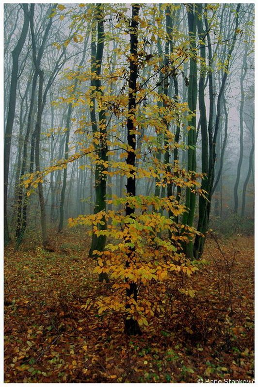 18-jesen.jpg