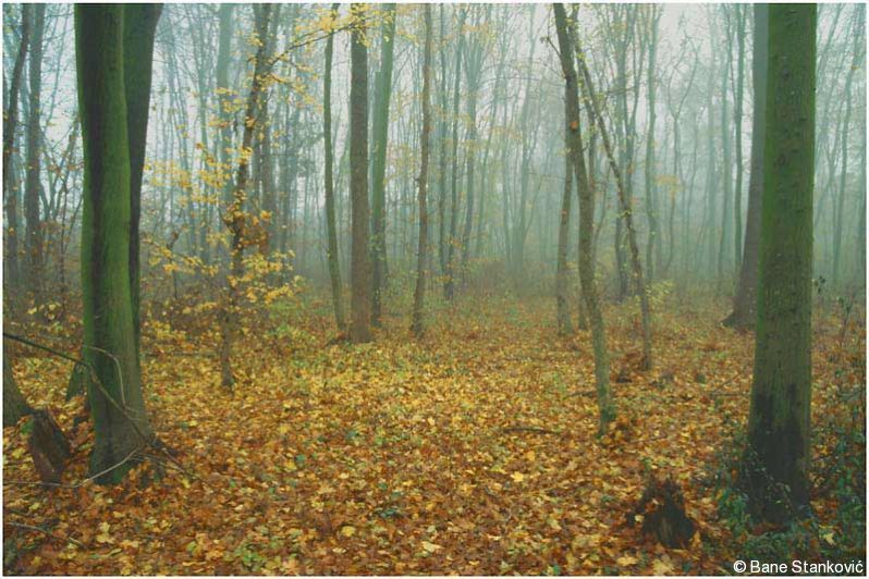 jesen-2.jpg