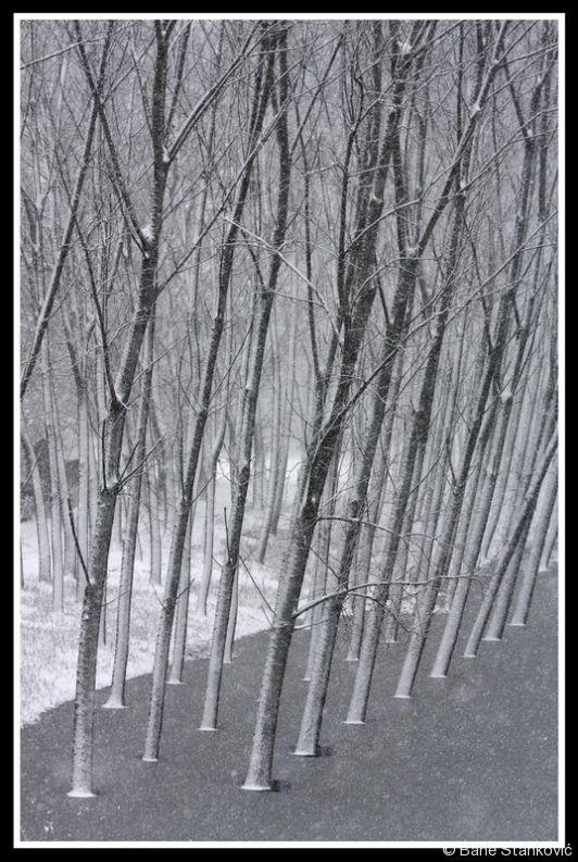 sneg-1.jpg
