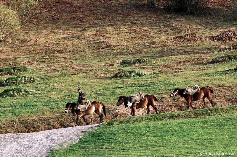 konjovodci_0.jpg